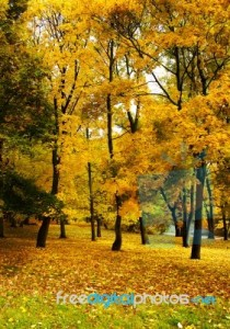 city-park-in-autumn-100372215